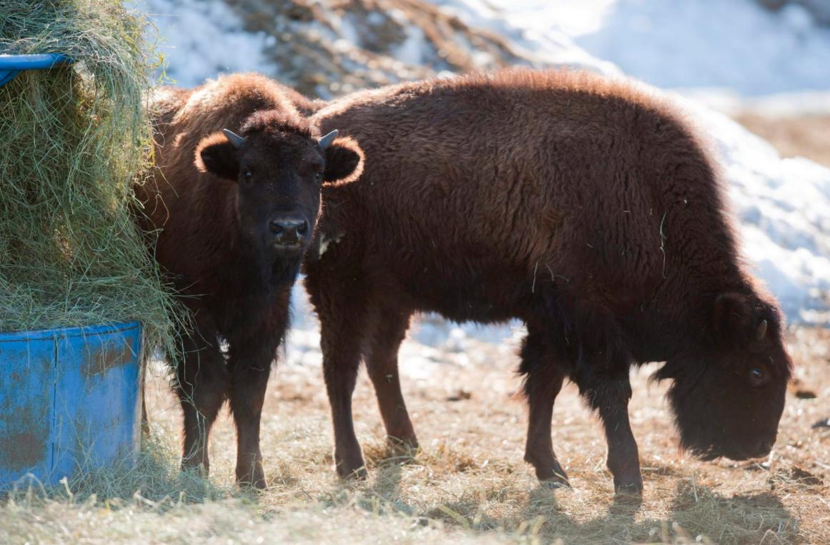Elk Island National Park Size