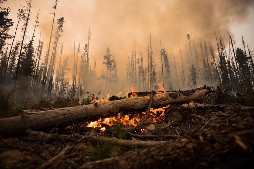 Fire-weary Western Canadians are picking up stakes and moving on