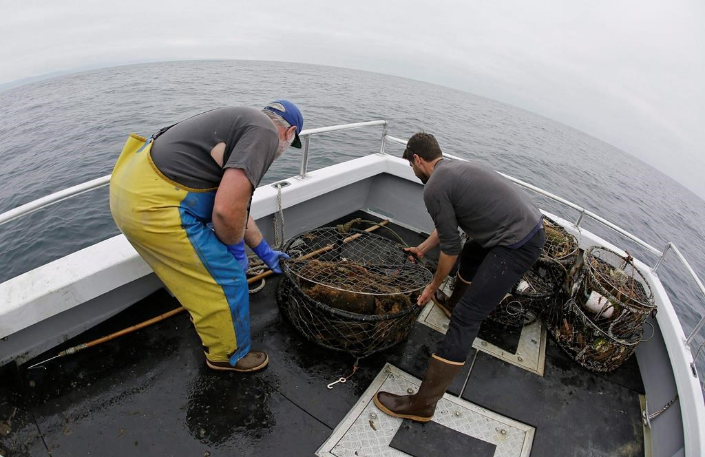 New Brunswick fishers get $2 million to test gear to prevent whale entanglements