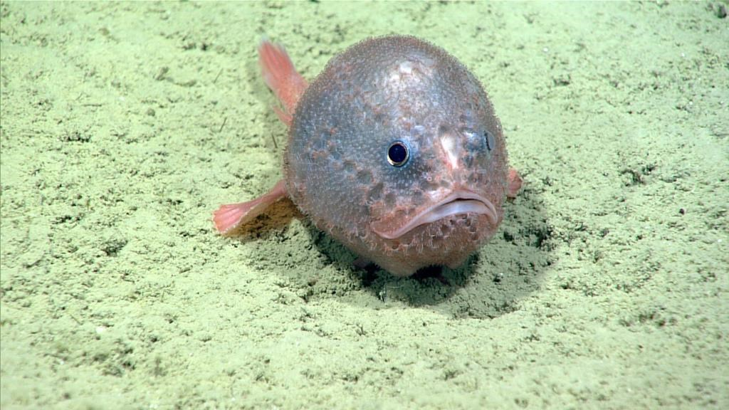 Rare species revealed by underwater technology off coast of Halifax