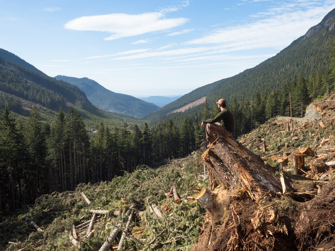 Debunking old-growth forest claims in British Columbia