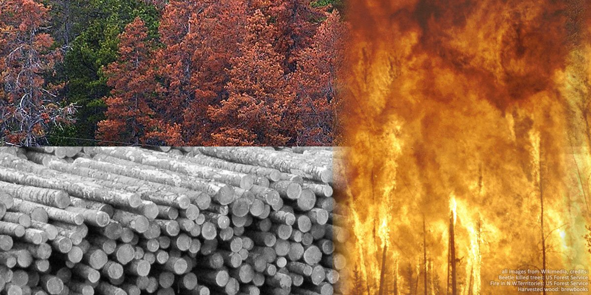 Canada's managed forests have turned into super-emitters, and 2018 set a record
