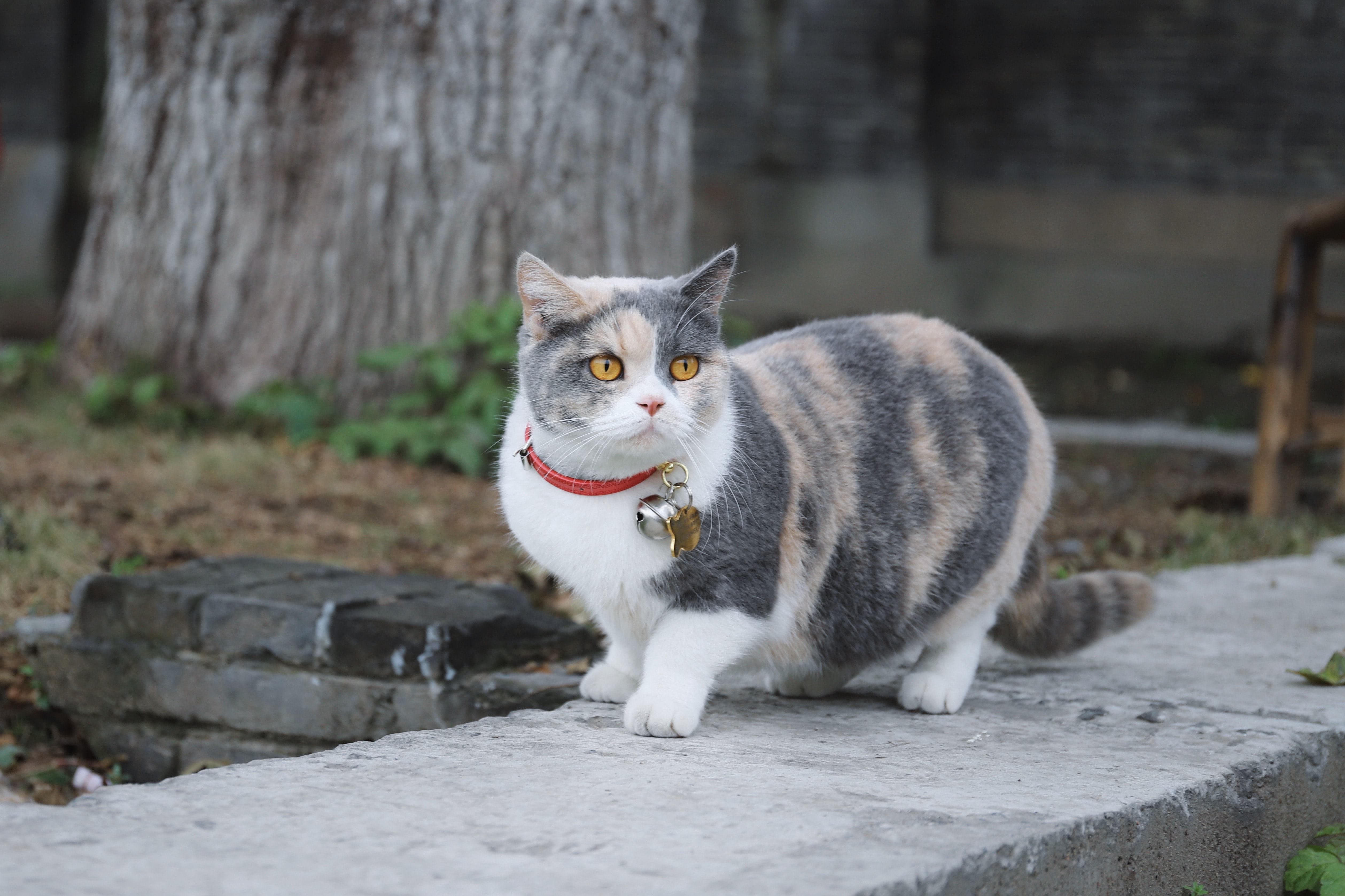 Why your cat likes to kill stuff