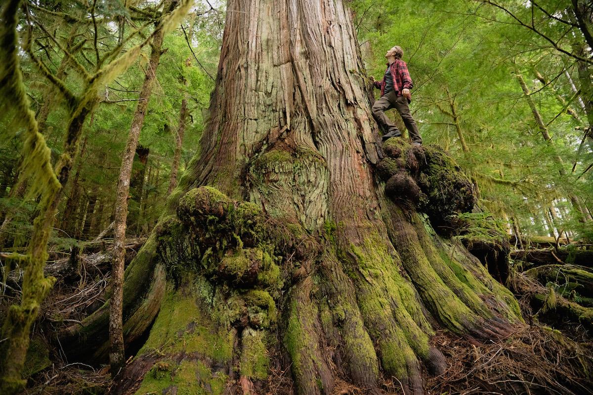 Teal-Jones wins court ban on Fairy Creek old-growth blockades