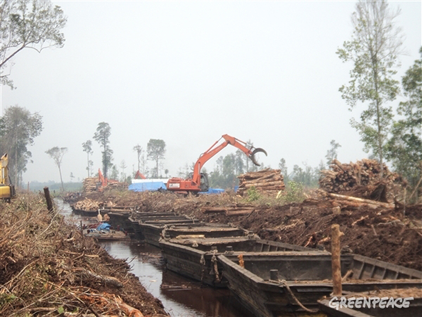Rainforest logs being stacked in Pulau Padang concession, Riau, Indonesia. 06/03/2014 © Greenpeace