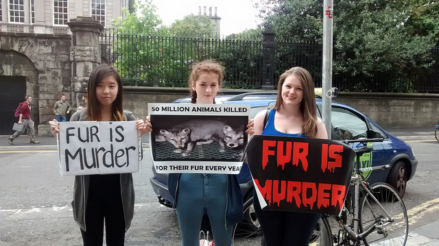 animal activist, anti-fur, fur industry, fur fashion, Canada