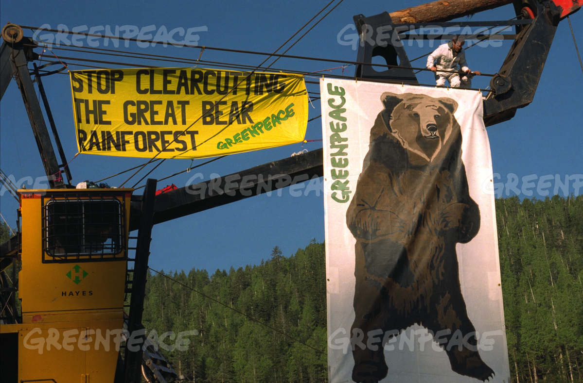 Great Bear Rainforest, Germany, Greenpeace protests, B.C. rainforest, timber industry, B.C. forestry, coastal temperate rainforest, spirit bear