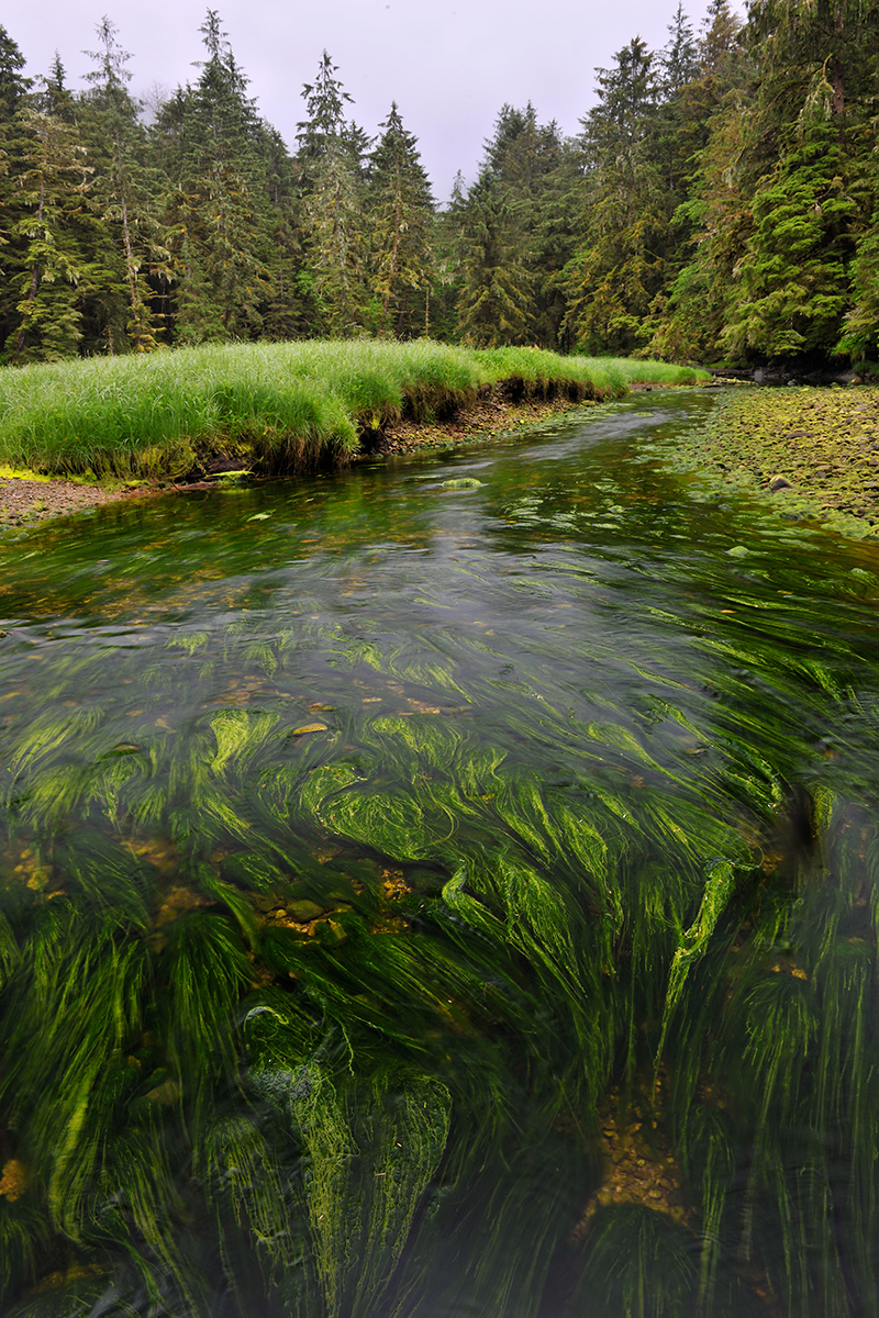 Great Bear Rainforest, Andy Wright, Greenpeace protests, B.C. rainforest, coastal temperate rainforest, spirit bear