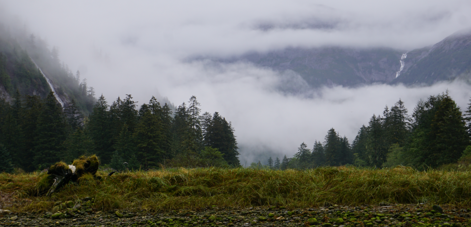 Great bear Rainforest, Mussel Inlet, old-growth trees, ancient forest, temperate coastal rainforestq