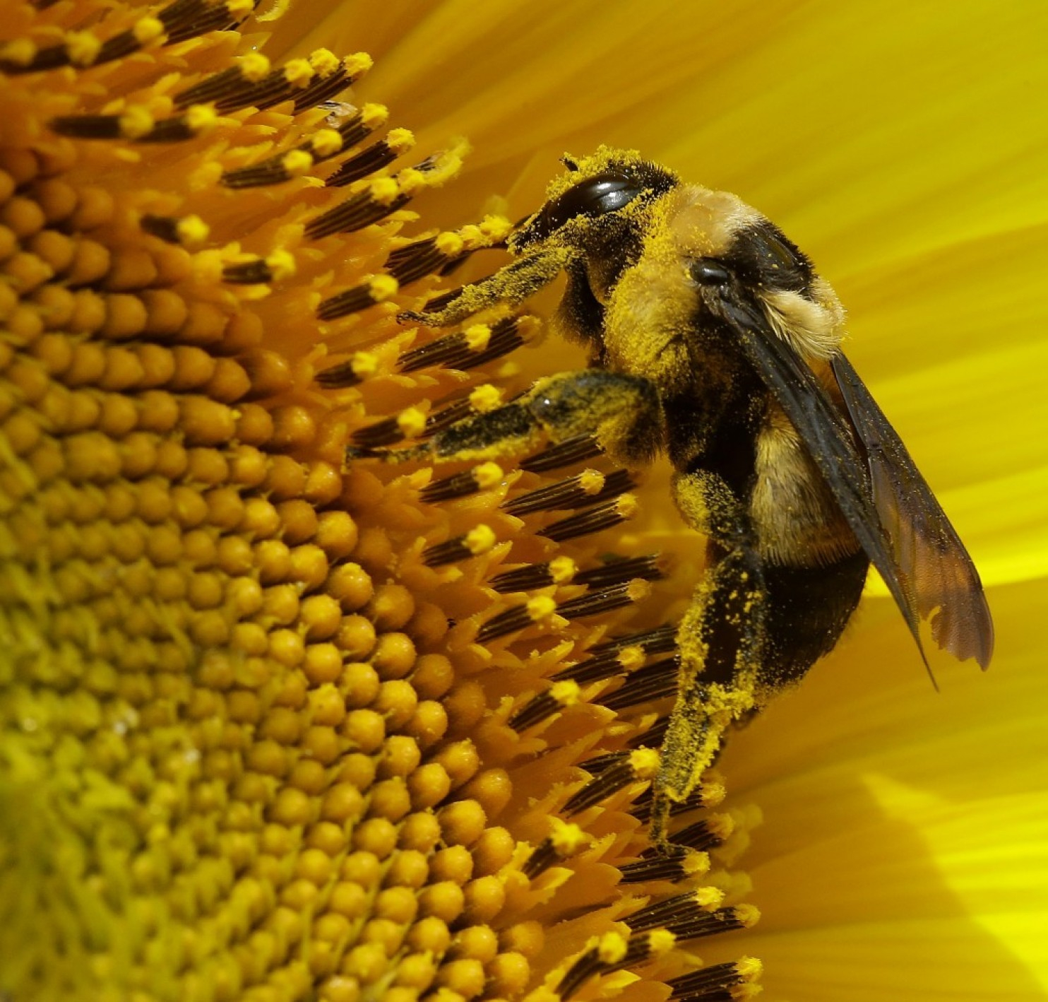 The Ontario Beekeepers' Association is urging the federal government to ban neonicotinoid pesticides. File photo by the Associated Press