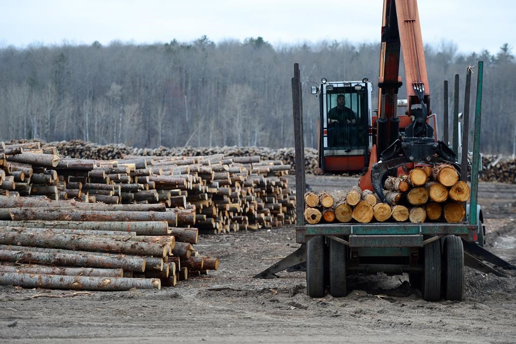 Logs are unloaded at Murray Brothers Lumber Company woodlot in Madawaska, Ontario on Tuesday April 25, 2017.
