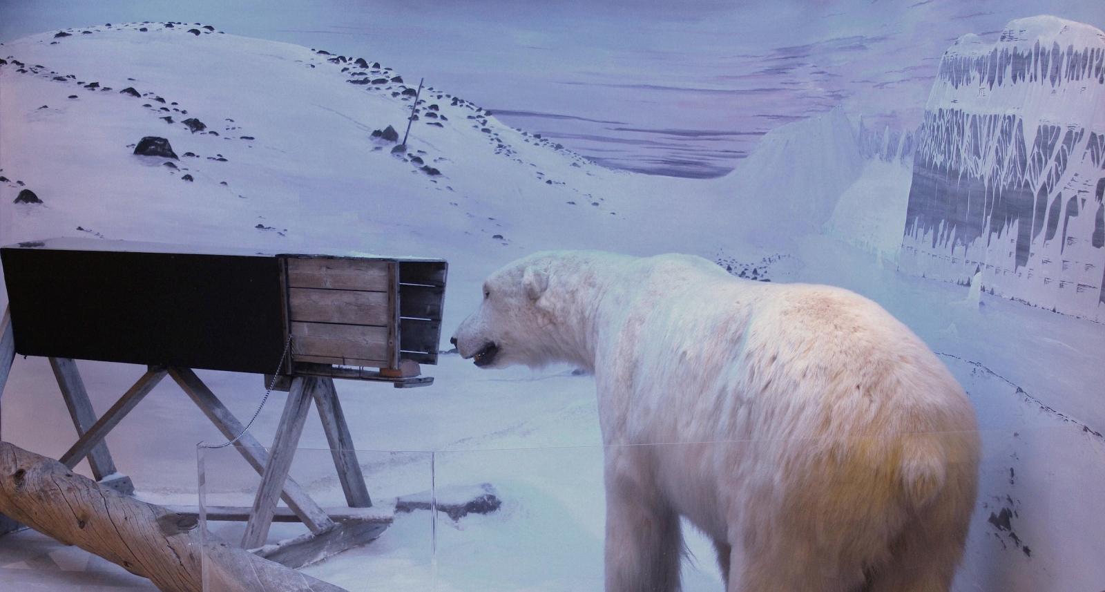 Polar Bear Prints Throughout History Michael Engelhard