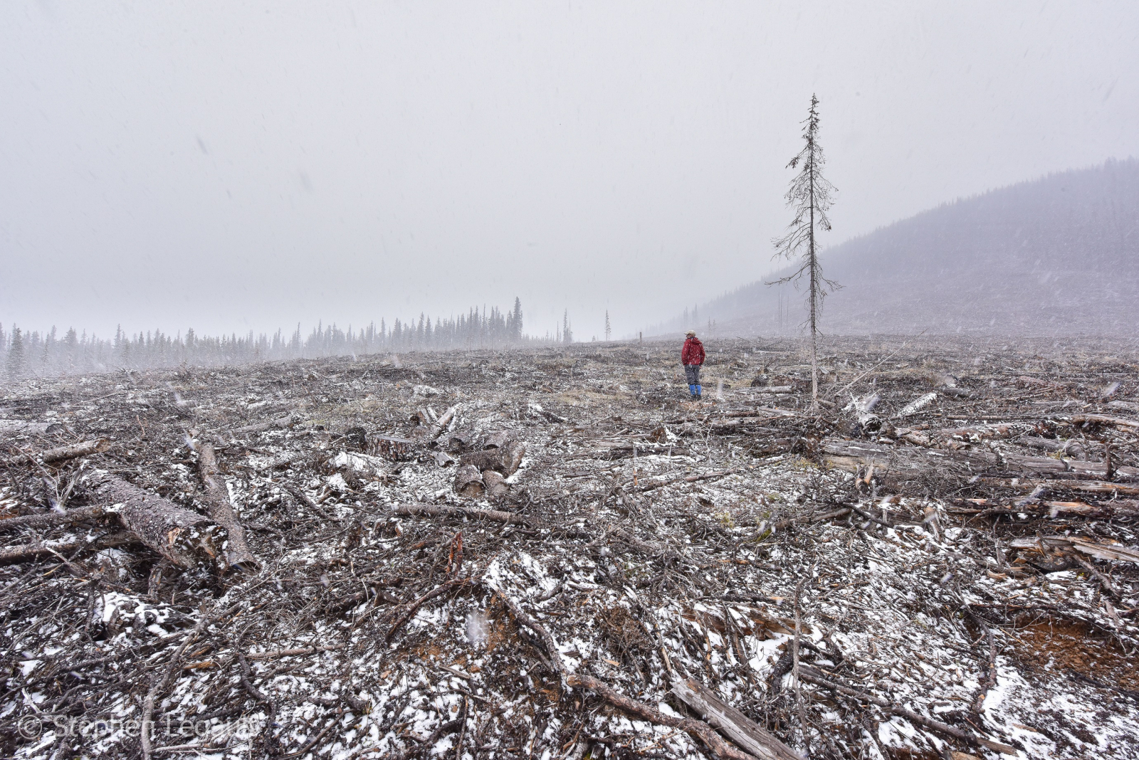 A clear cut in the Cataract Creek drainage of the Highwood River below Plateau Mountain Ecological Reserve. Photo provided by Stephen Legault