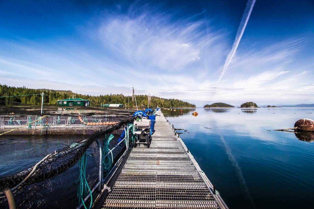 Marine Harvest fish farm Swanson Island, B.C.
