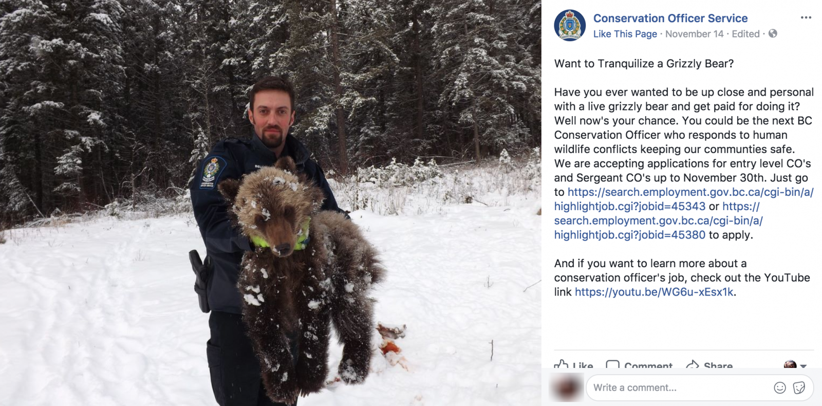 Conservation Officer Service, British Columbia, grizzly bears, trophy hunt