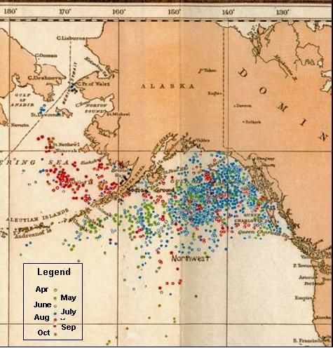 Map showing right whale catches from 1785 to 1913 in the eastern North Pacific from the records of U.S. whaleships. Photo from Environment and Climate Change Canada