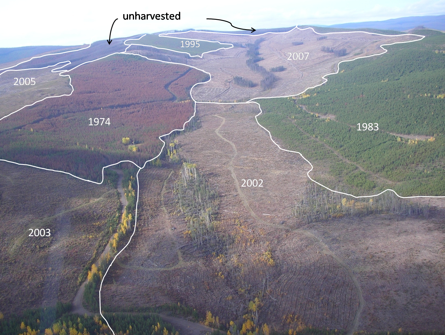 A picture of a 600-hectare portion of forest, included in a 2009 report, is marked up to show dates of harvest. Illustration provided by the B.C. Forest Practices Board