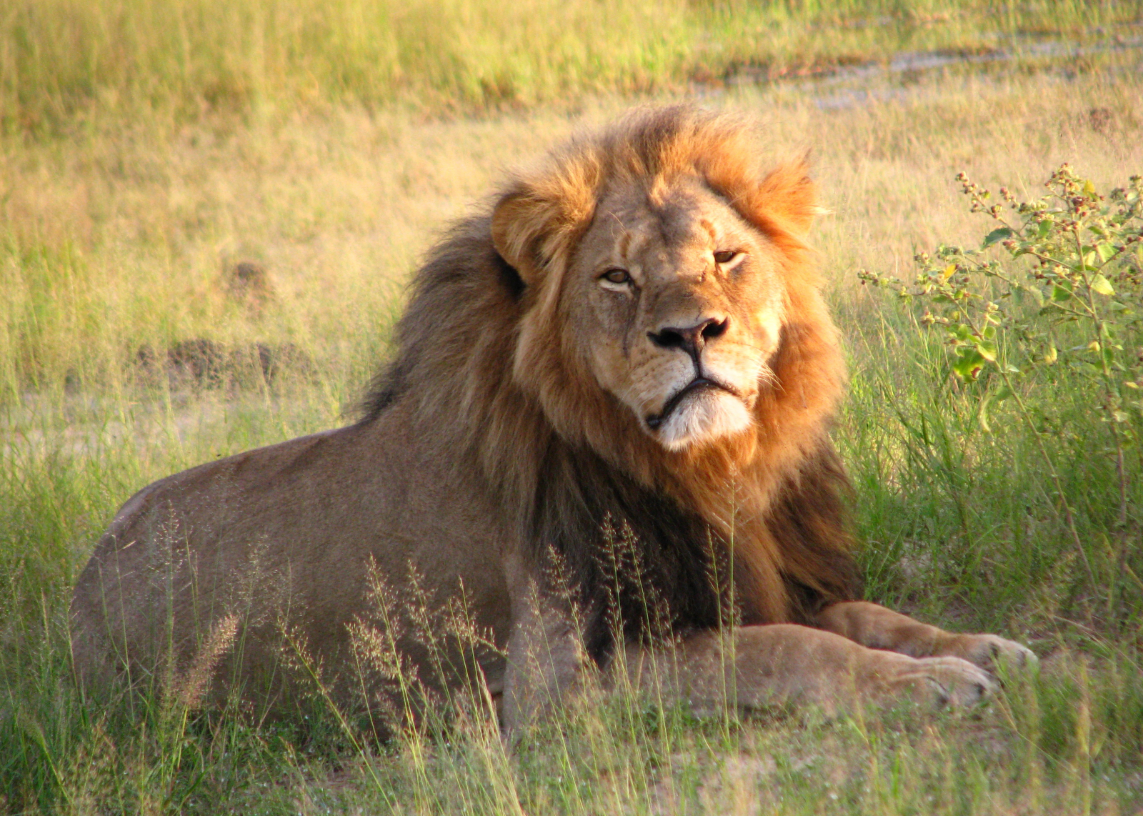 As international trophy hunting expo kicks off, the ethics