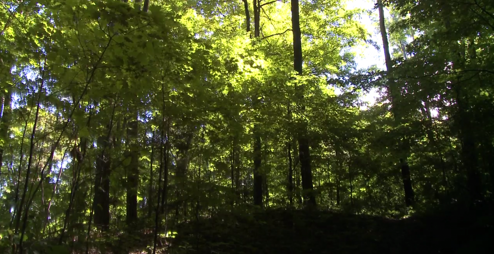 Conservationists Expand Protection For Old Growth Forest Near Toronto
