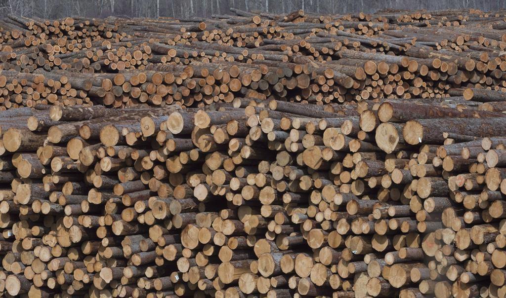 U S Lumber Lobby Softwood Dispute