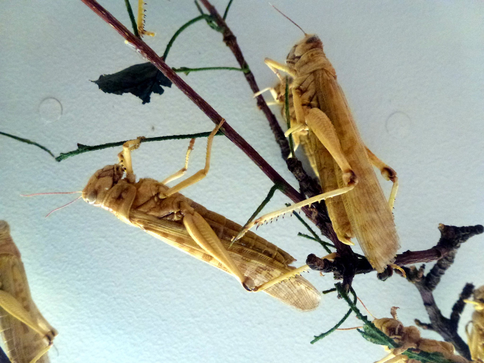 NP Explained: How easy is it to kill a swarm of locusts?