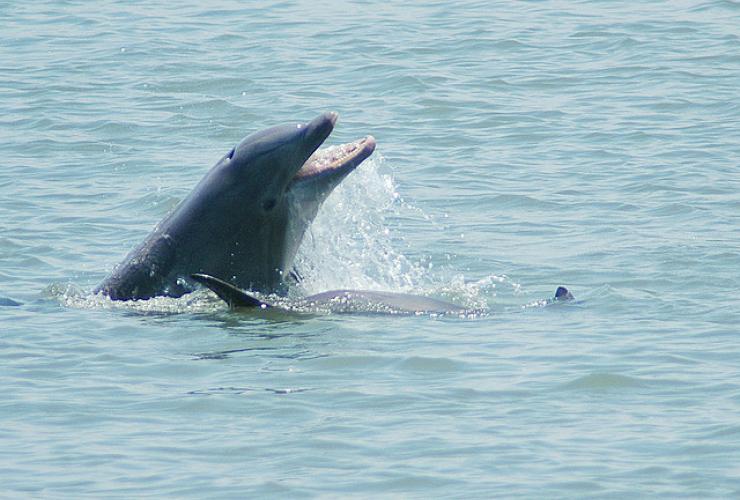 Dolphins, extinction, Atlantic Canada
