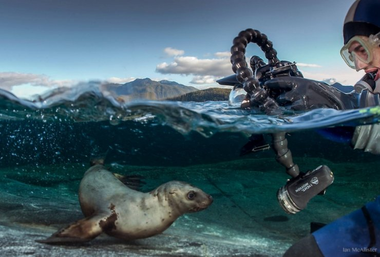 Young sea lion on Great Bear Sea being photographed - Ian McAllister