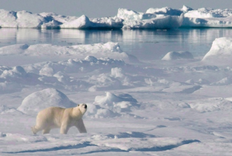Arctic, Baffin Bay, Arctic Ocean, polar bear, Canadian Press