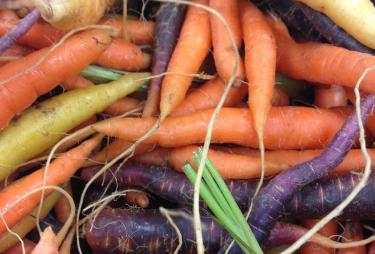 heirloom carrots, Sam Robertson, Westboro Farmers Market, organic, locally-grown, Ontario agriculture