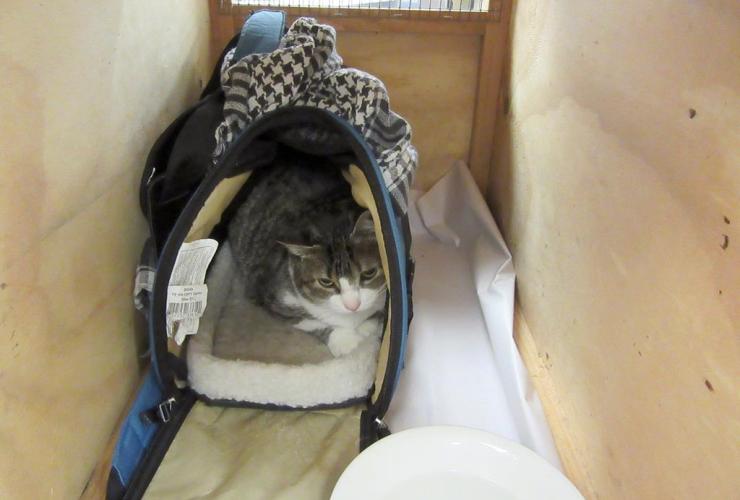 cat, new zealand, Canada