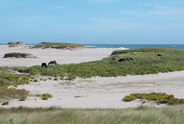 Sable Island, wind project, Nova Scotia island, renewable energy technology,  national park reserve, Parks Canada, renewable power generation