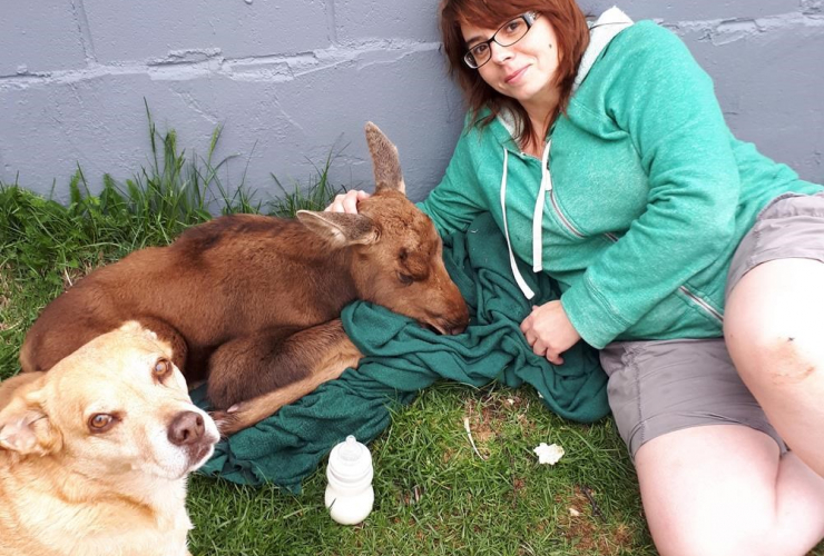 Brandi Calder is shown sitting next to a baby moose in this undated handout image from Newfoundland.