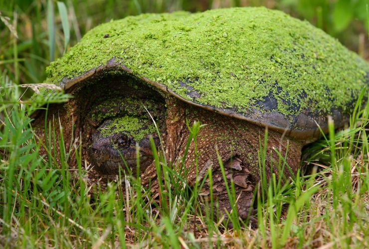 The Nature Conservancy of Canada's new 15,000 acre conservation area between Mont Tremblant and the Ottawa Valley is called Kenauk, which is turtle in Algonquin. Handout photo by The Nature Conservancy of Canada/Mike Dembeck