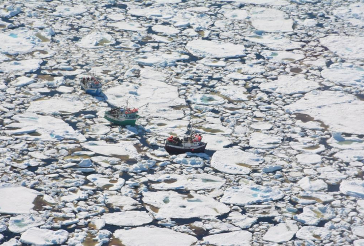 Boats are shown trapped in heavy ice off La Scie, Newfoundland in a handout photo from the Department of Fisheries and Ocean.
