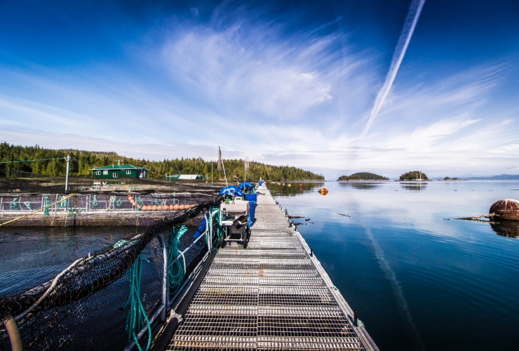 Alert Bay, salmon farming