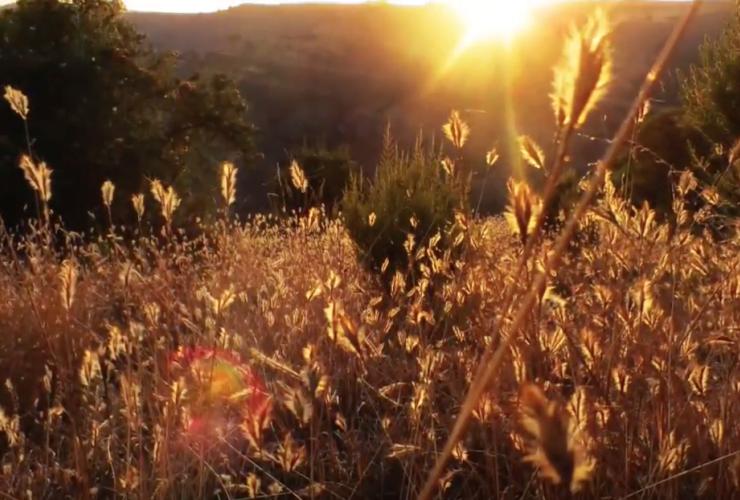 Wheat, Simien Mountains, Ethiopia, Plants