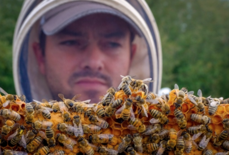 bee, pollinator, pesticides, Health Canada, Ecojustice, Pest management regulatory agency