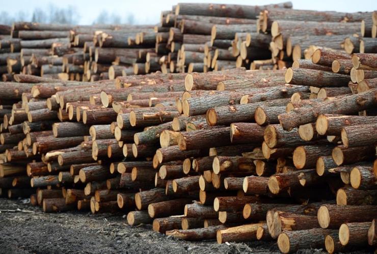 Logs, stacked, Murray Brothers Lumber Company, woodlot, Madawaska, Ontario,