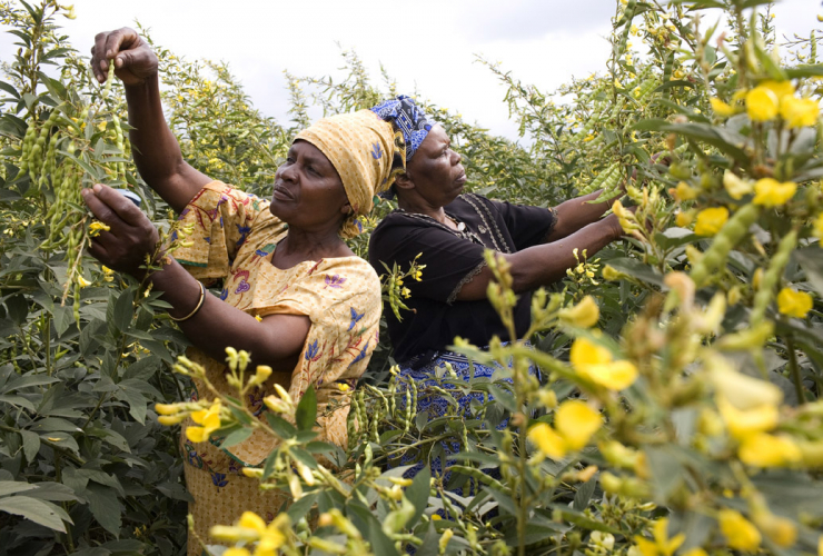 women, agriculture, Africa
