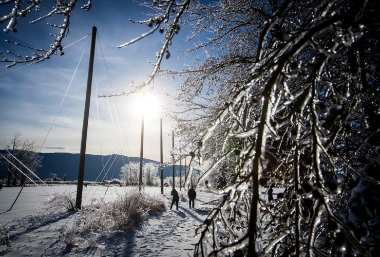 Ice, coats, tree branches, Christie Dornian, photographs, Mark Dornian, Chilliwack,