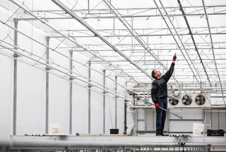 Don Short, overhead irrigation system, greenhouse, Lincoln,