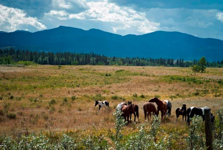 Alberta, wildlife, deforestation, conservation