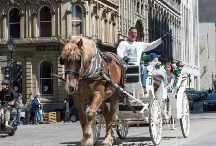 Caleches, Montreal, horse-drawn carriage, animal welfare, tourism, animal cruelty