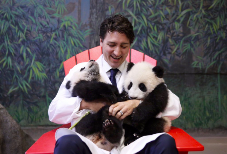 Prime Minister Justin Trudeau meets panda cubs at the Toronto Zoo on March 7, 2016. Photo from Trudeau's Twitter account