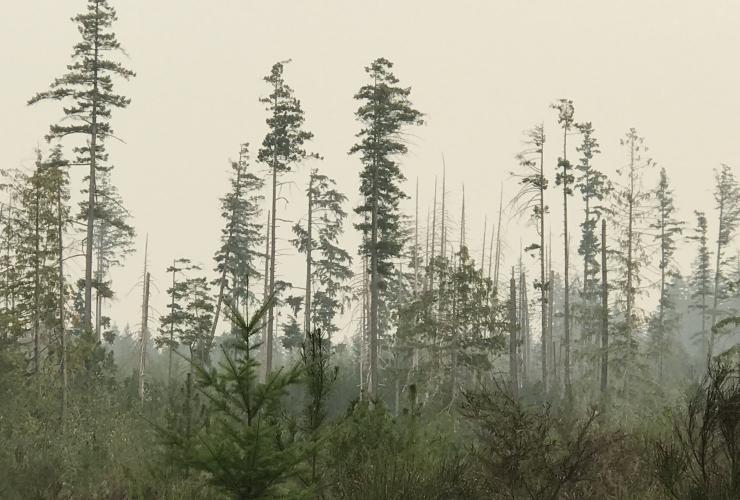 Smoke from BC wildfires over Discovery Island clear cut, August 2018