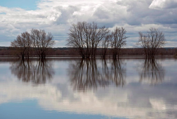 Trees, floodwaters, Saint John River, Jemseg,