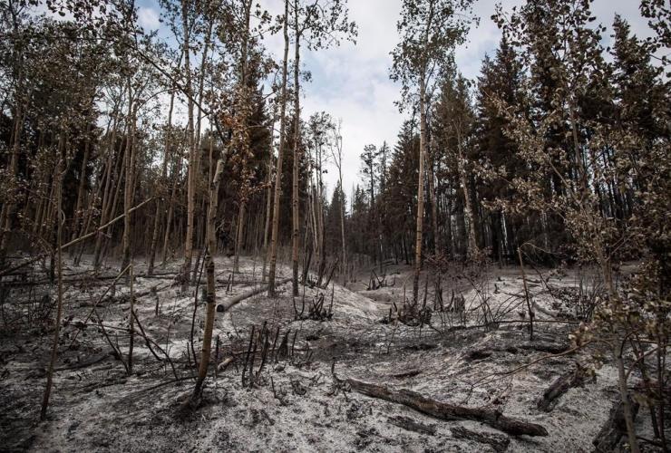 Ash, Shovel Lake wildfire, Fort Fraser,