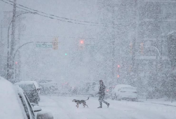 person, dog, snow, Vancouver,