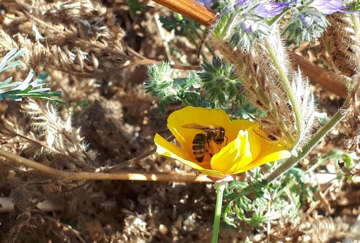 honey bee, flower,