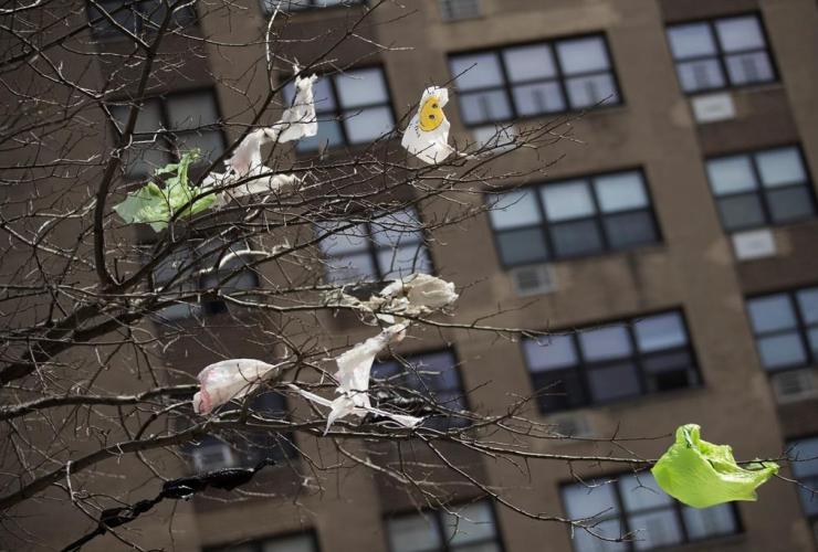Plastic bags, branches, Manhattan,